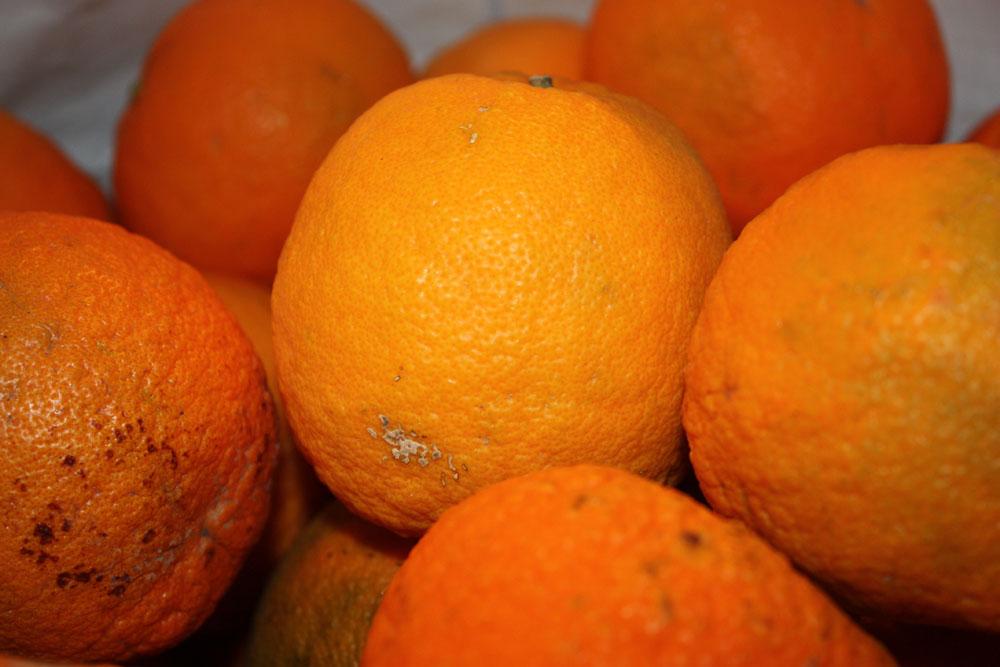 L'orange amère – appelée aussi Bigarade - est la première à être parvenue en Europe. Originaire de Chine, elle est passée par l'Egypte en suivant la route des caravanes puis parvint jusqu'en France dans les bagages des croisés qui la rapportèrent de leur épopée en Terre Sainte