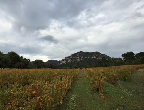 C'est en 1903 qu'Auguste Faye fait l'acquisition du domaine « Le Mas de la Dame ». Il s'en sert comme maison de chasse avant que son fils Robert, au début du XXème siècle, se décide à défricher les lieux pour planter des vignes.