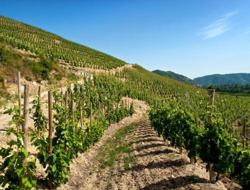 Les vins de Crozes Hermitage se caractérisent par leur équilibre et leur fraicheur. Les terroirs et le travail des vignerons donnent des vins tantôt sur le fruit et la fraicheur, tantôt sur la gourmandise et la rondeur.